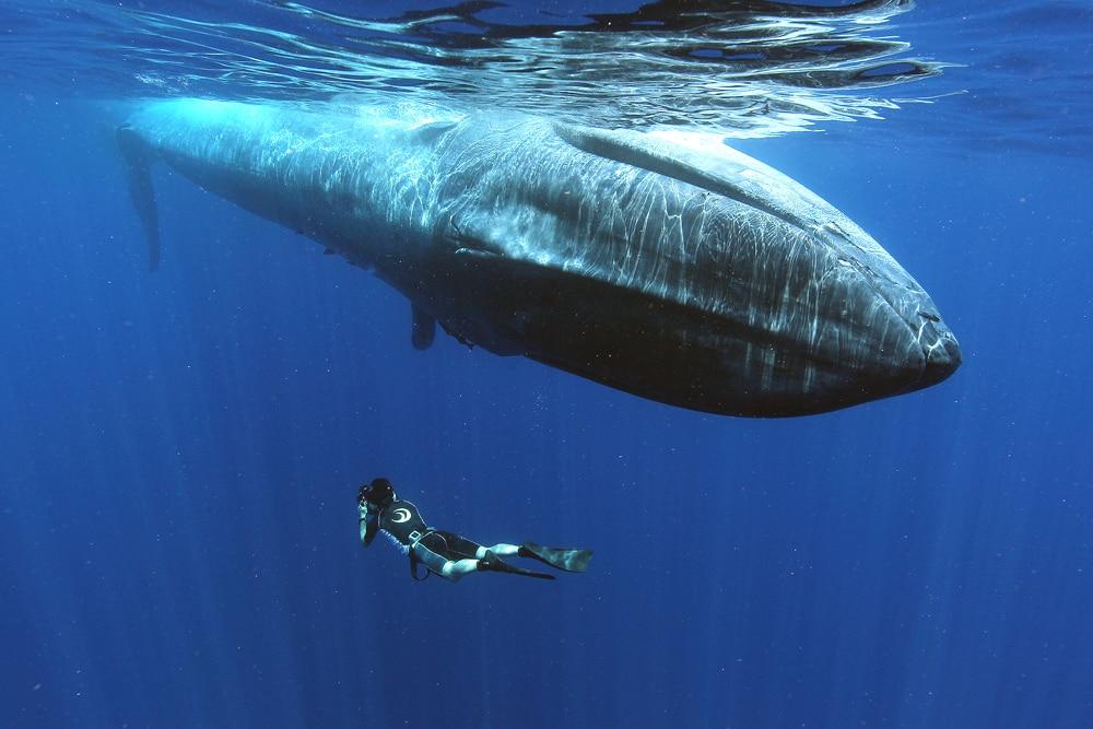 Tips voor onderwaterfotografie